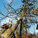 Spring has sprung, time to check Winter damage to your trees!