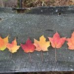 Fall Color Science