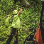 Now Hiring: Tree Groundsman